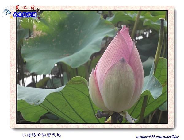 中正區~台北植物園001