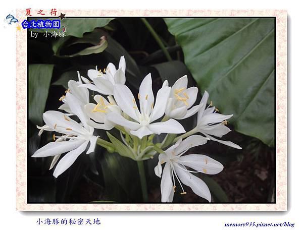 中正區~台北植物園006