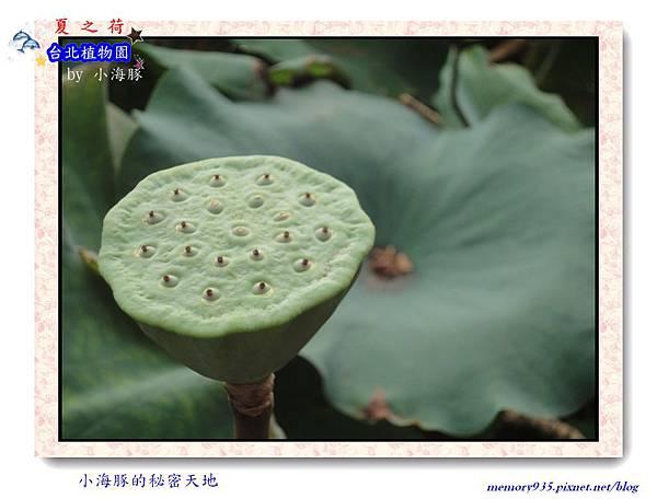 中正區~台北植物園007