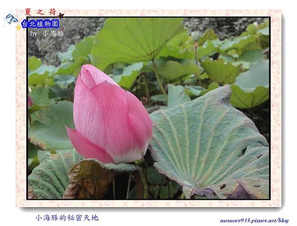 中正區~台北植物園008