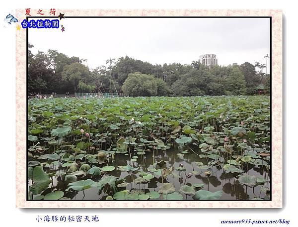 中正區~台北植物園010