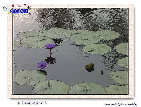 中正區~台北植物園011