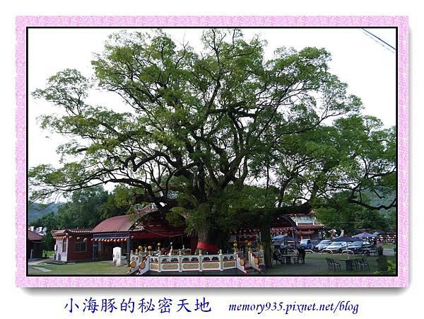 集集鎮。大樟樹公園