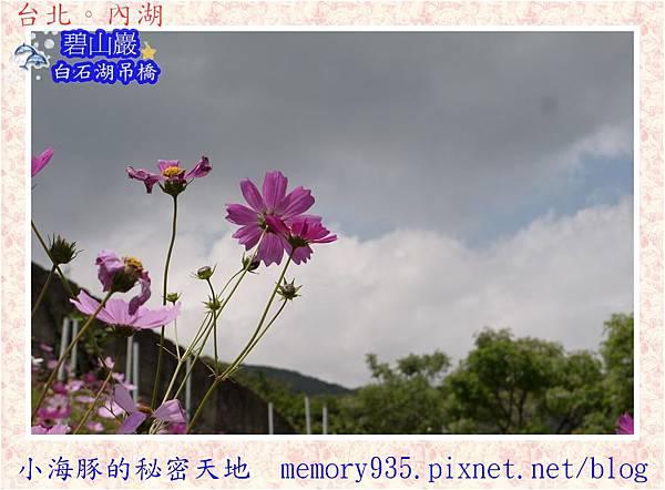 內湖區~白石湖遊憩區018