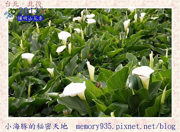 2013陽明山花季006