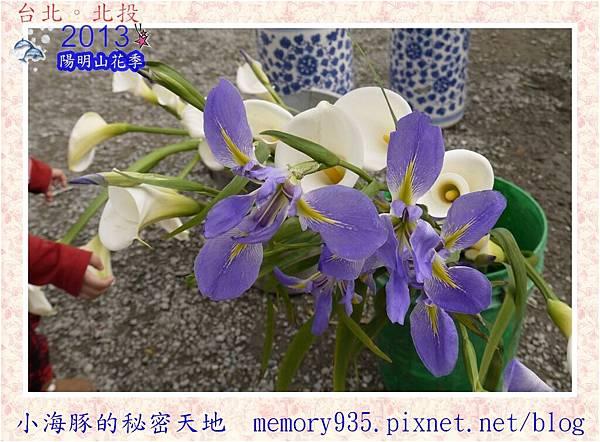 2013陽明山花季009