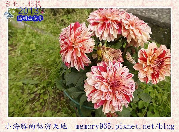 2013陽明山花季012