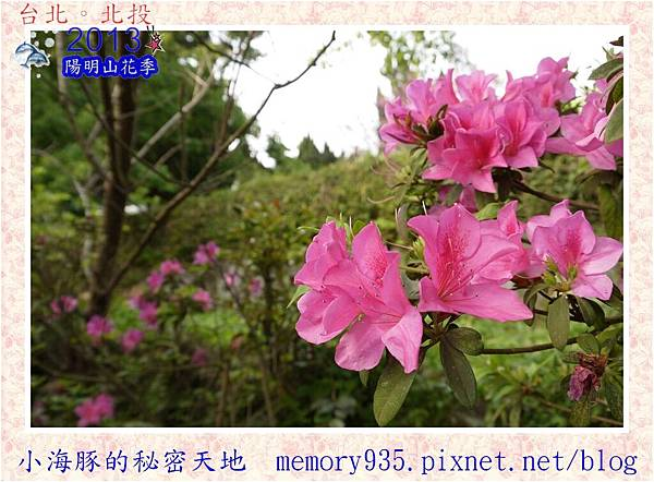 2013陽明山花季015