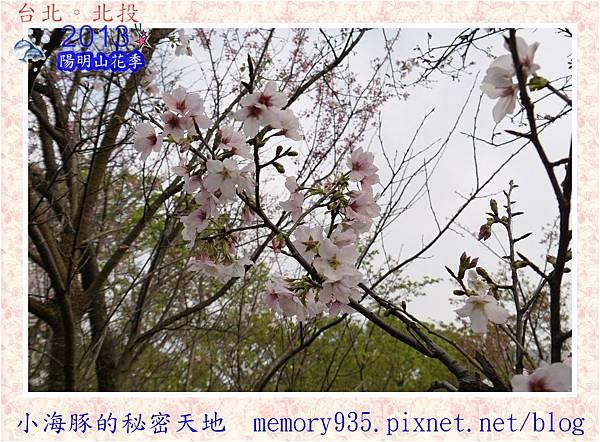 2013陽明山花季017
