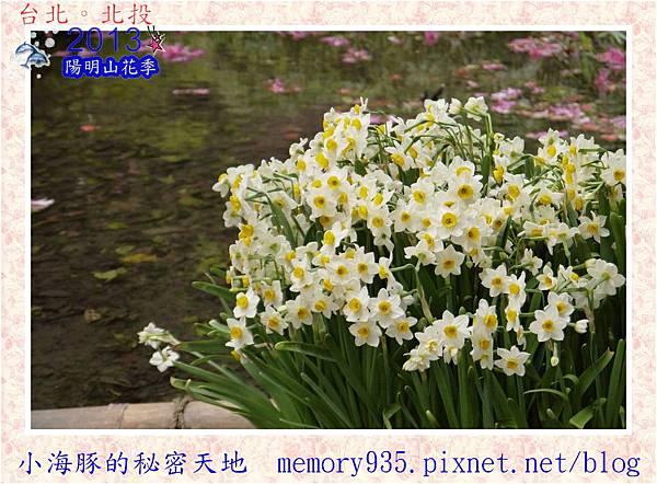 2013陽明山花季020