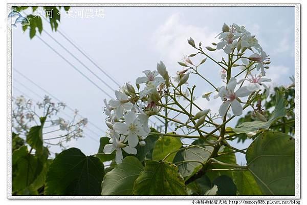 東河~東河農場004