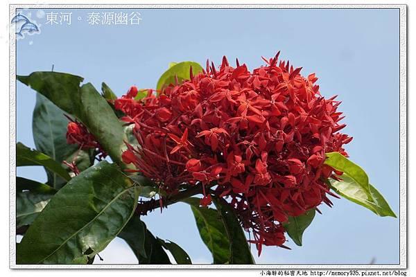 東河~泰源幽谷002