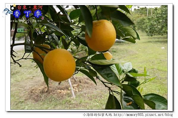 東河鄉~香丁季006