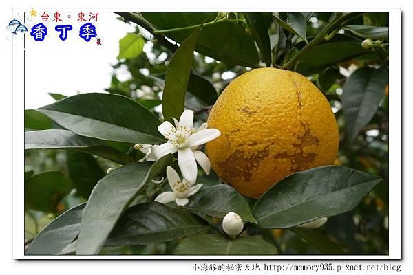 東河鄉~香丁季022