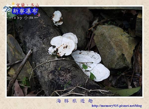 冬山鄉~新寮瀑布014