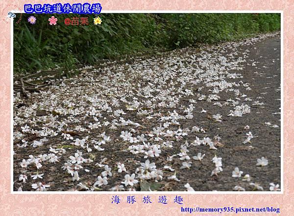 三灣~巴巴坑道休閒農場004