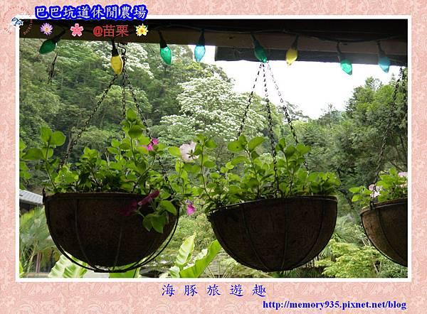 三灣~巴巴坑道休閒農場011