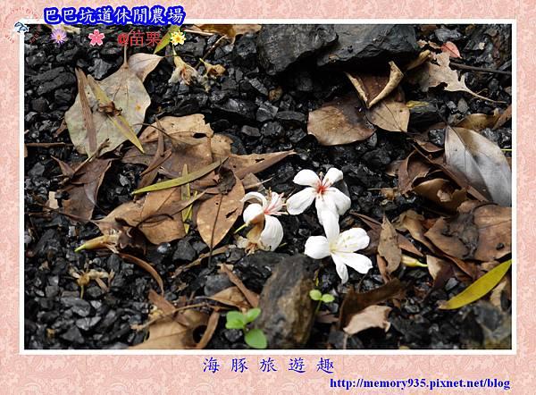 三灣~巴巴坑道休閒農場017