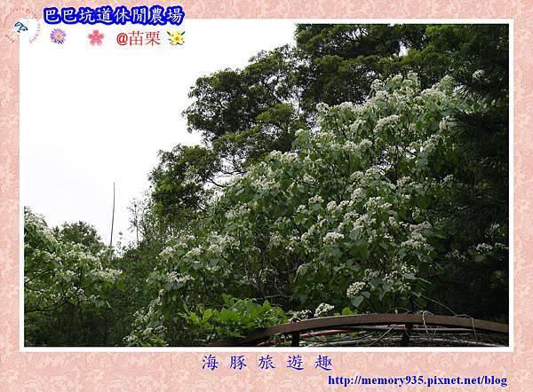 三灣~巴巴坑道休閒農場026