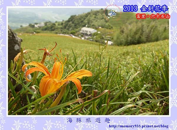 2013金針花季