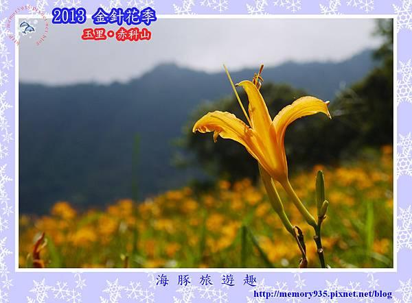 2013赤科山金針季006