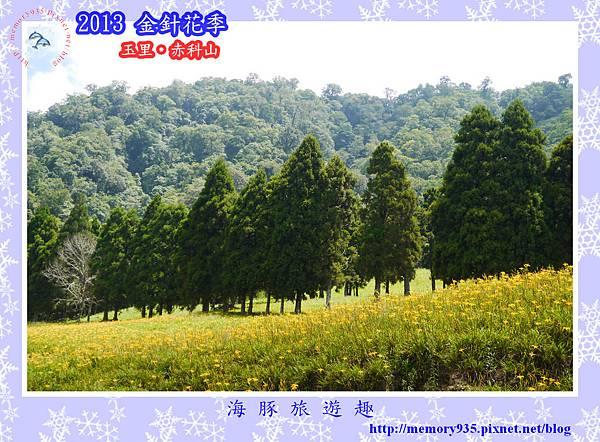 2013赤科山金針季010