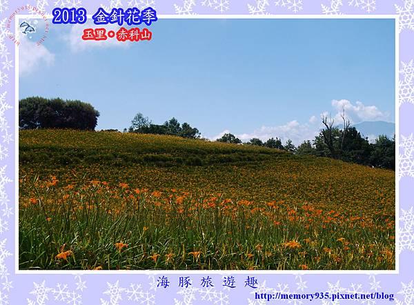 2013赤科山金針季017
