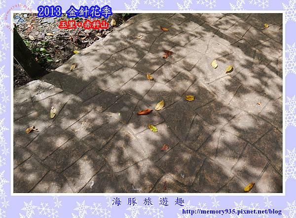 2013赤科山金針068