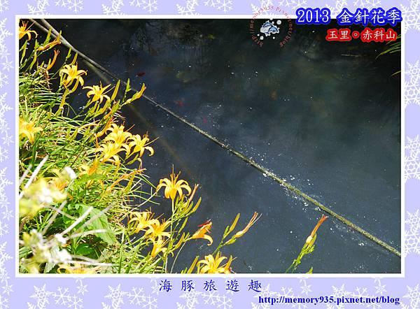 2013赤科山金針070