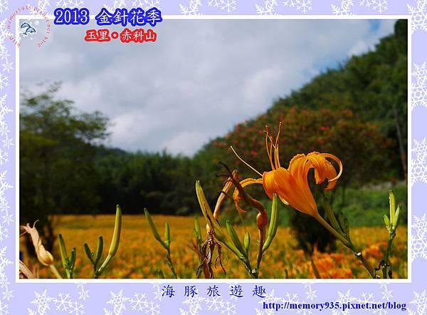 2013赤科山金針073