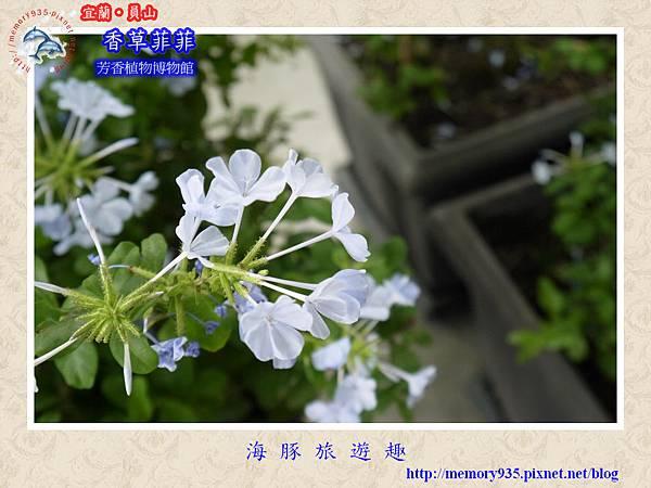 員山~香草菲菲芳香植物博物館004