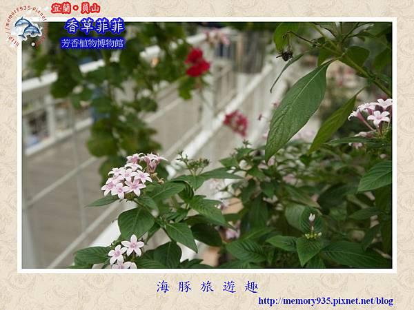 員山~香草菲菲芳香植物博物館009