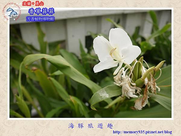 員山~香草菲菲芳香植物博物館018