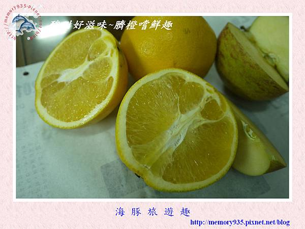 臍橙015