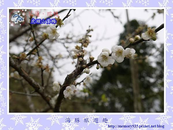 梅~瑞穗虎頭山014
