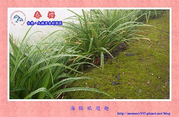2014櫻花