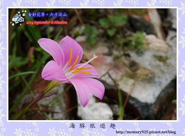 2014金針花季。六十石山009
