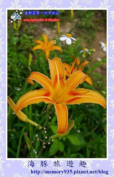 2014金針花季。六十石山016