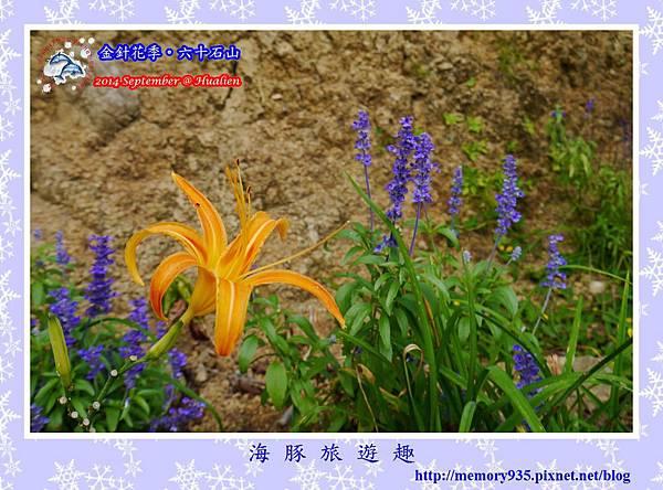 2014金針花季。六十石山018