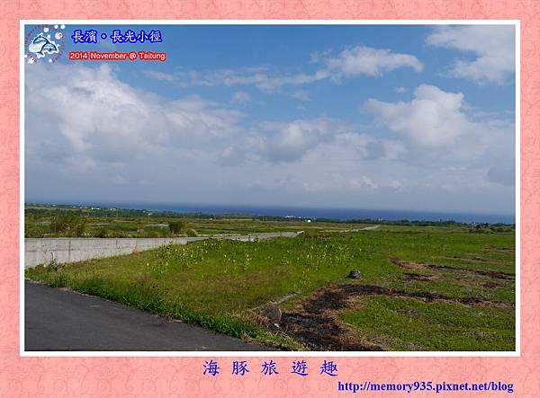 長濱。長光梯田大道 (6)