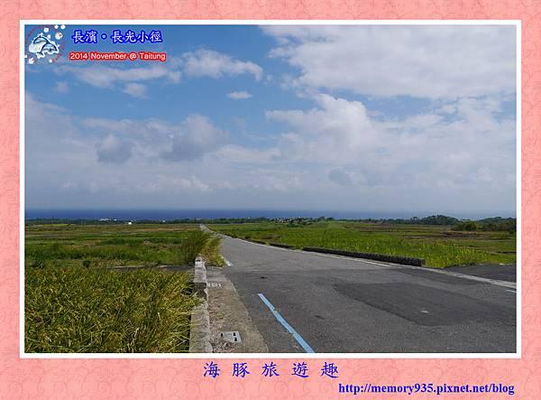 長濱。長光梯田大道 (7)
