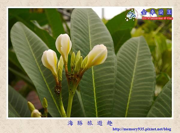 金車蘭園 (5)