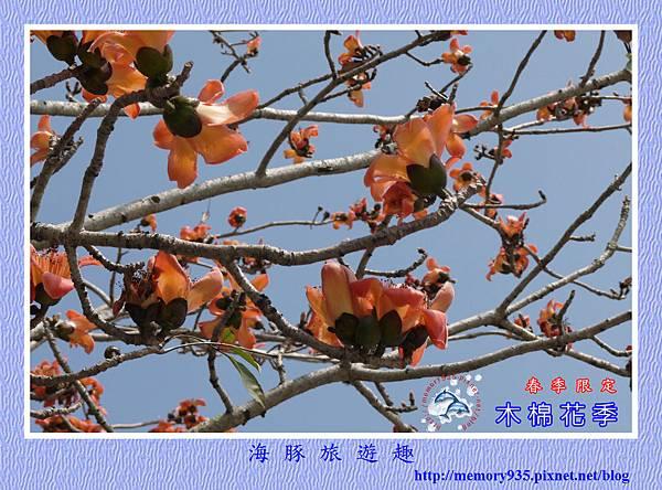 木棉花 (2)