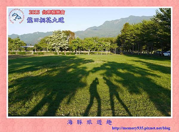 2015桐花季。龍田桐花大道 (1)