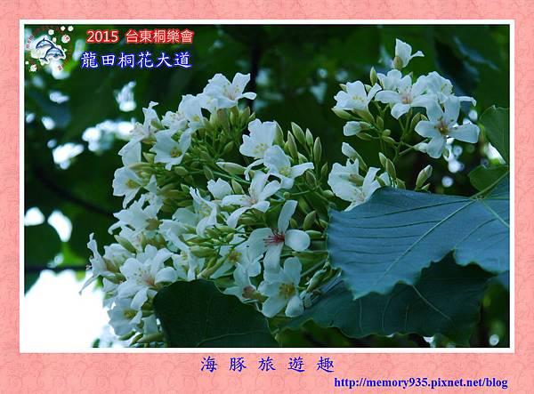 2015桐花季。龍田桐花大道 (14)