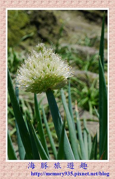 蔥花 (2)