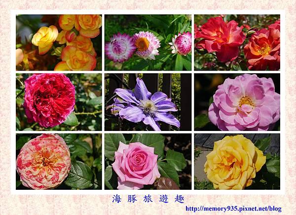 台北。新生玫瑰園 (1)