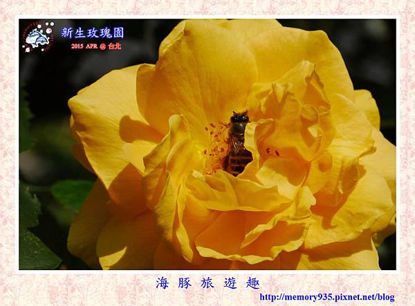 台北。新生玫瑰園 (4)
