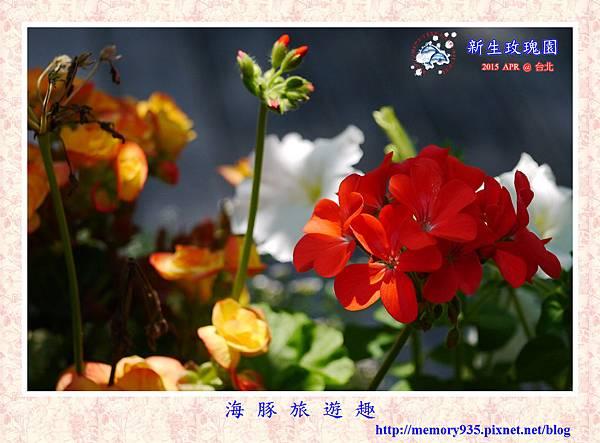 台北。新生玫瑰園 (7)
