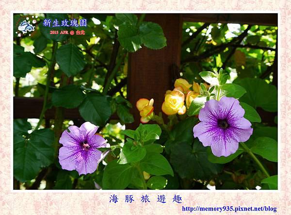 台北。新生玫瑰園 (10)